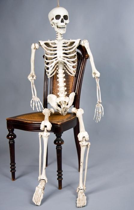 Skelett, ca. 160 cm