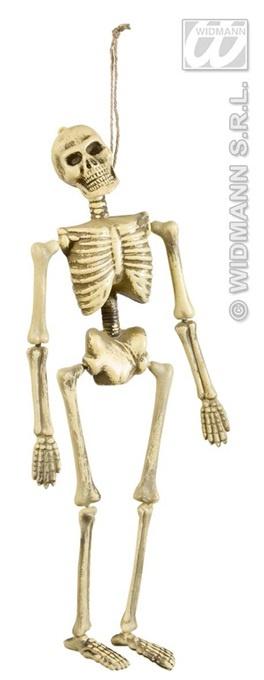 Skelett ca 40cm