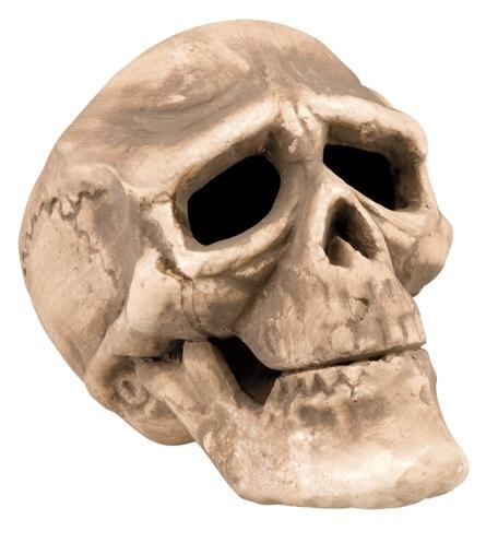 Totenkopf ca 17x18 cm