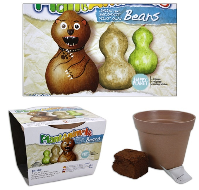 Plantanimals Kürbis zum Züchten in Bärform - Box ca 15x12x14