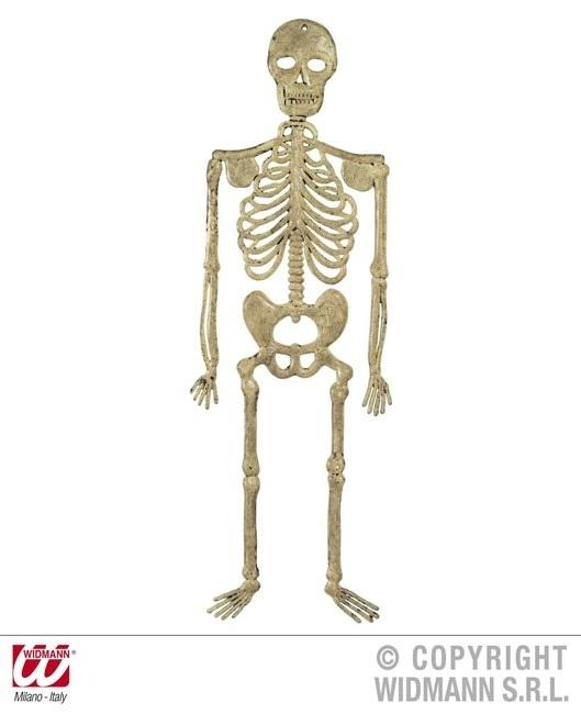 Skelett 32 cm
